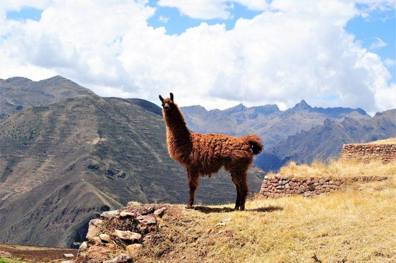 HUCHUY QOSQO PERU TREK, Huchuy Qosqo Trek 2 Days